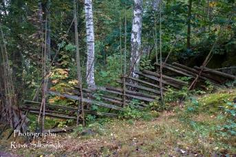Autumn 2015 (93 of 233)