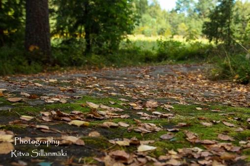 autumn (8 of 32)