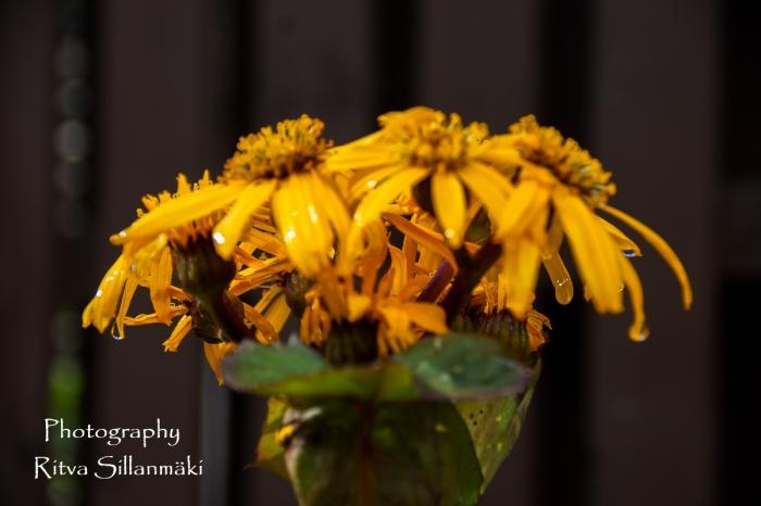 Flowers of September (1 of 23)