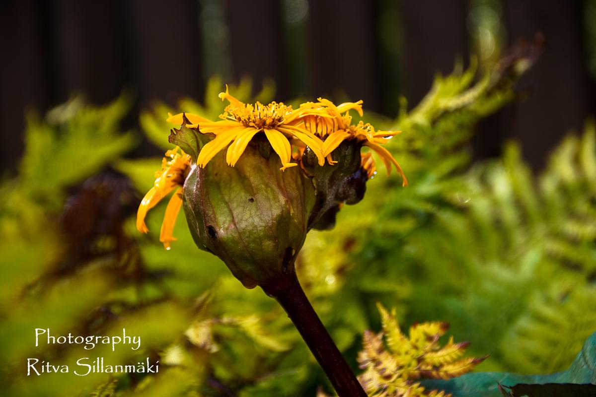 Flowers of September (4 of 23)