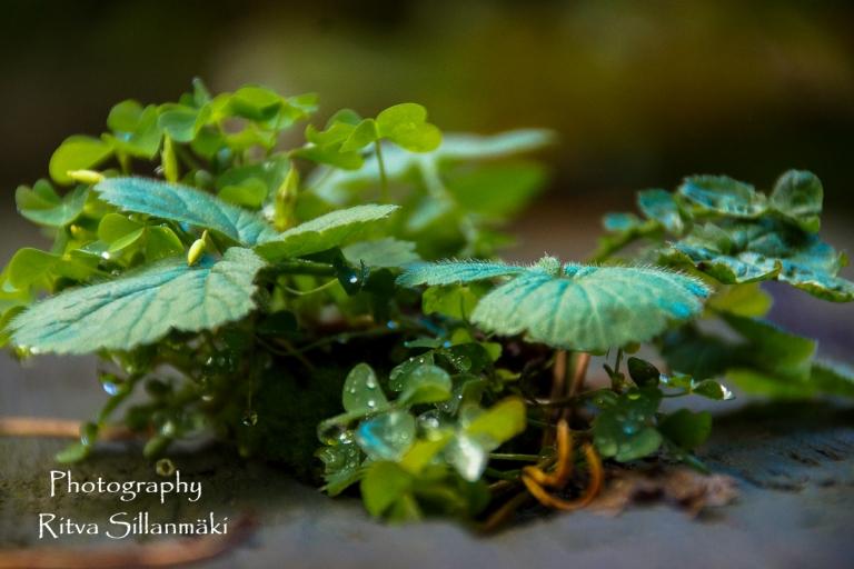 Flowers of September (9 of 23)
