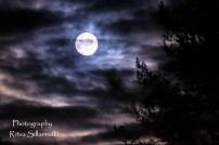 Moonlite night