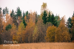 Country side autumn 2015 (38 of 179)
