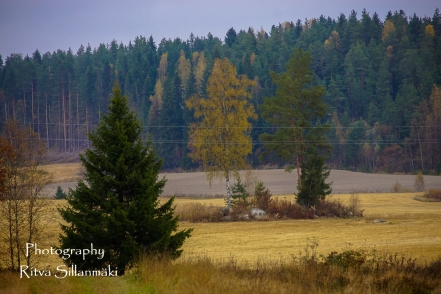 Country side autumn 2015 (54 of 179)