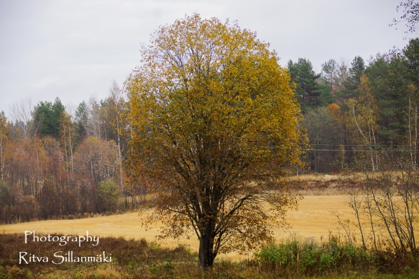 Country side autumn 2015 (56 of 179)