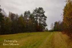 Country side autumn 2015 (62 of 179)
