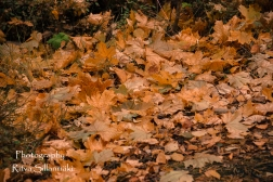 Country side autumn 2015 (79 of 179)