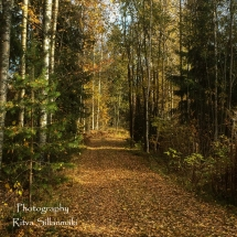 Country side autumn 2015 (88 of 179)