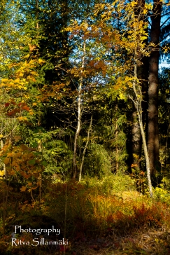 nature oct_15 (12 of 13)