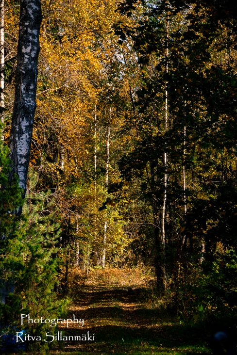 nature oct_15 (4 of 13)