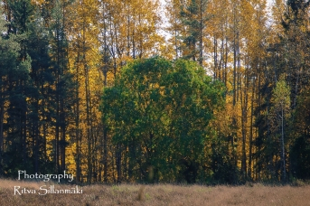 nature oct_15 (6 of 13)