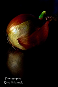 onion (10 of 19)