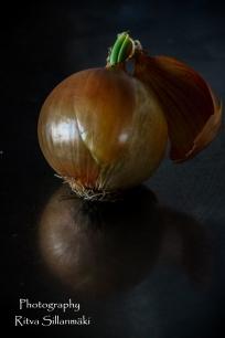 onion (13 of 19)