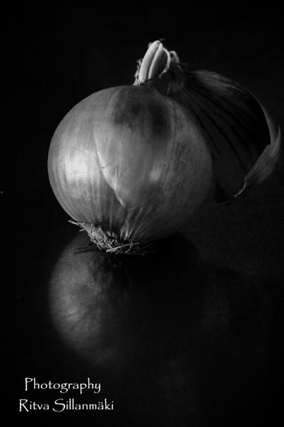 onion (14 of 19)