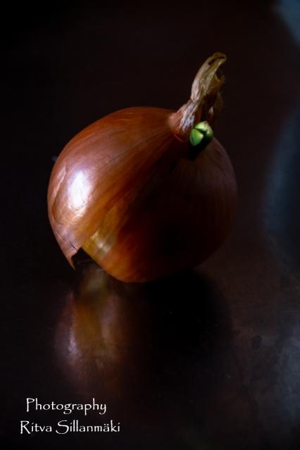onion (17 of 19)