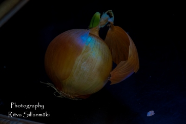 onion (5 of 19)