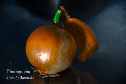 onion (6 of 19)
