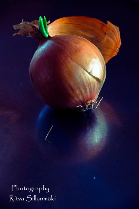 onion (8 of 19)