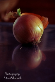 onion (9 of 19)