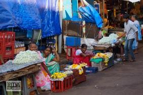 Maposa , Goa (43)-31