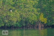 Chapora River (247)