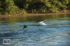 Chapora River (256)