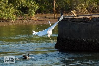 Chapora River (257)