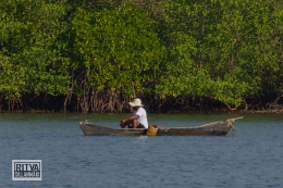 Chapora River (263)