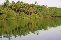 Chapora River (269)