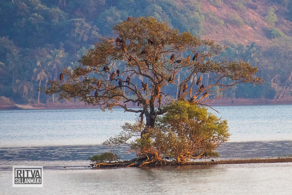 Chapora River (54)-2