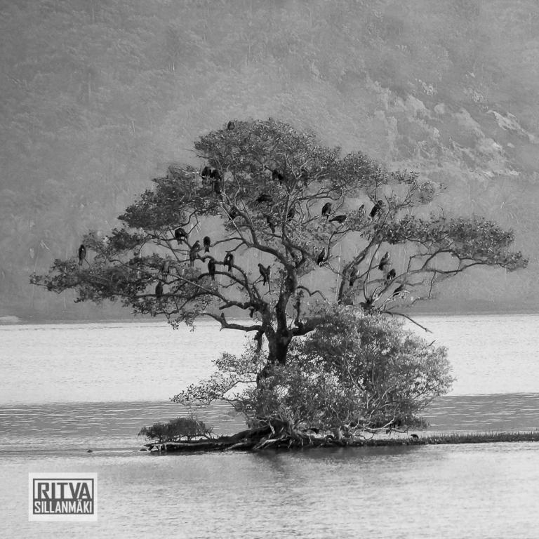 Chapora River (54)-3