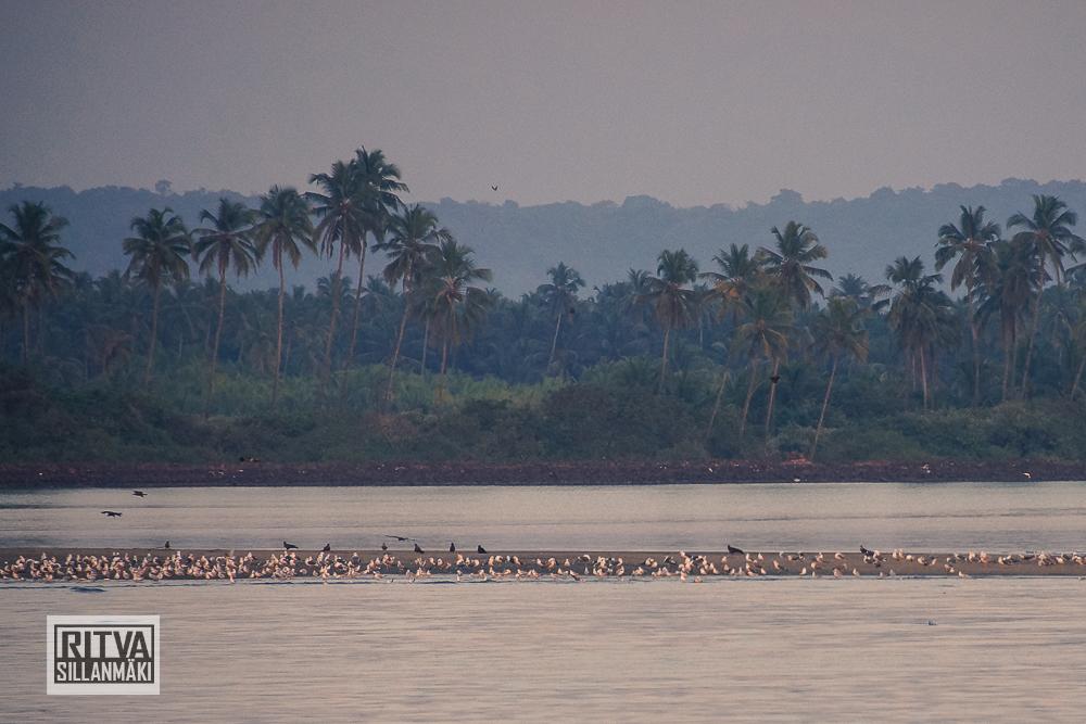 Chapora River (69)