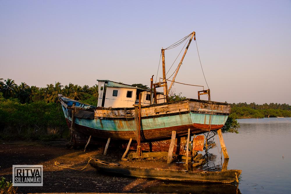 Chapora River (9)