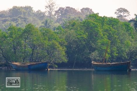Goa India, Chapora River (38)