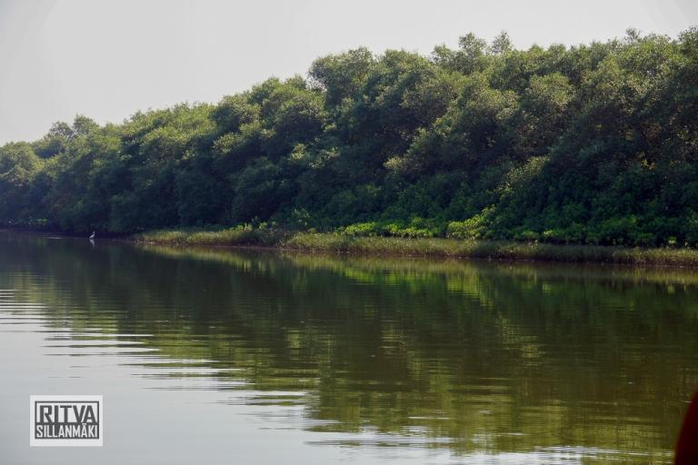 Goa India, Chapora River (46)