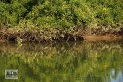 Goa India, Chapora River (75)