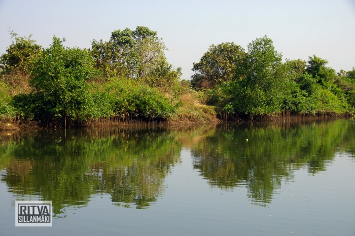Goa India, Chapora River (77)