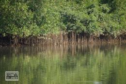 Goa India, Chapora River (78)