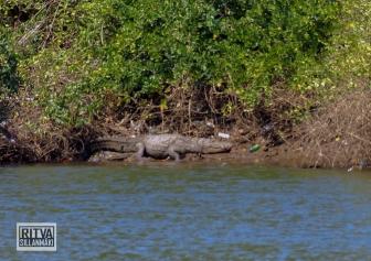 Goa India, Chapora River (93)