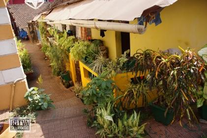Goa India, Panjim(761)