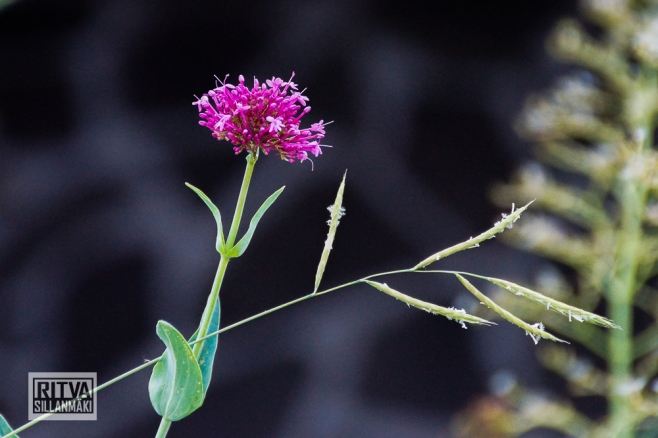 FlowerS (1 of 6)