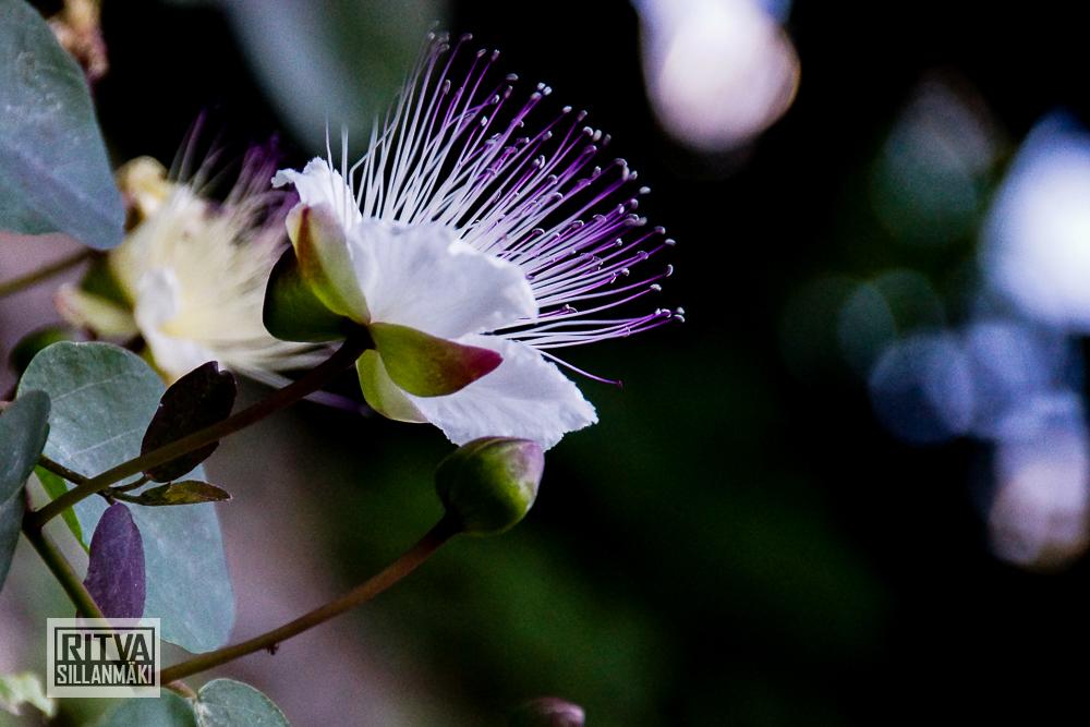 FlowerS (6 of 6)