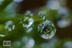 droplets-03509-2