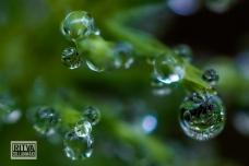 droplets-03509