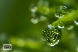 droplets-03510-3
