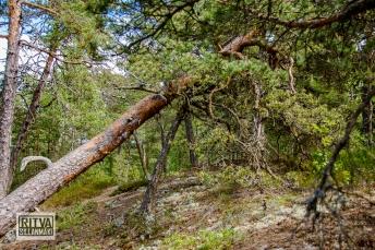 Porkkalanniemi-Finland-04649