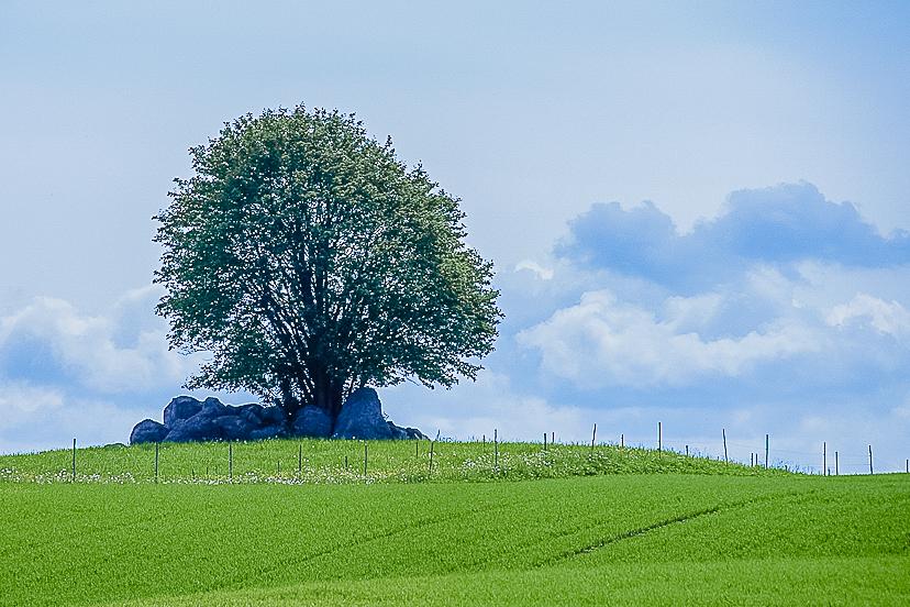 simple landscape-