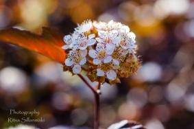 Summer flowers (11)