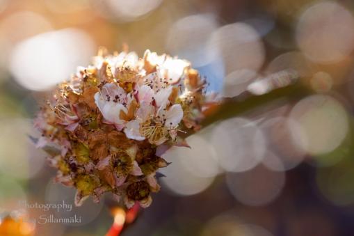 Summer flowers (15)
