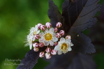 Summer flowers (17)